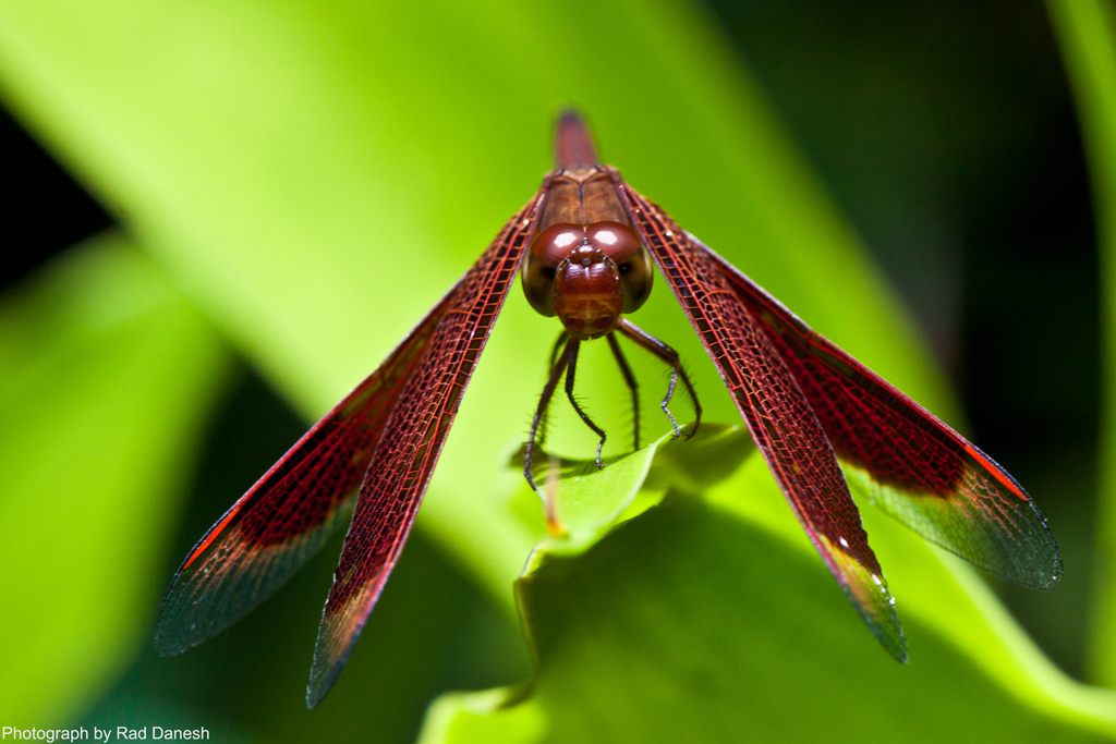 Butterfly Park - Kuala Lumpur