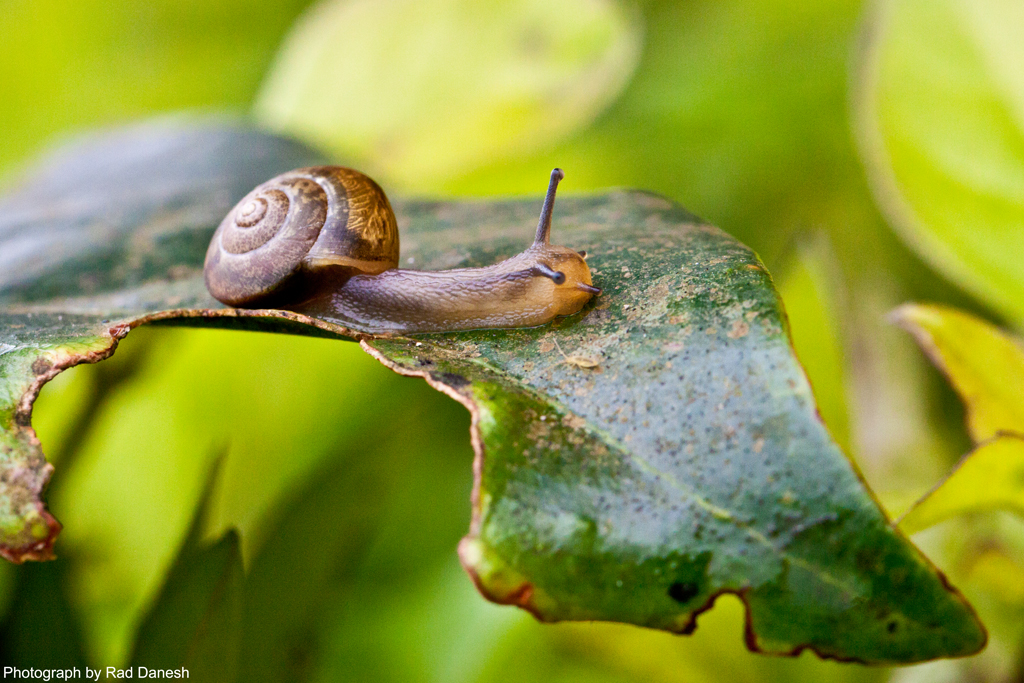 Mr. Snail, Genting Highlands, Malaysia